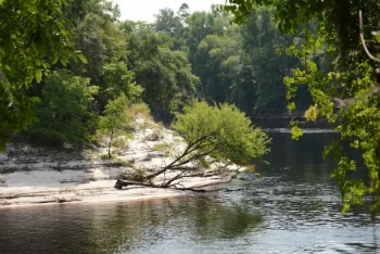 The Suwannee River in Live Oak. Photo: Jake Galvin
